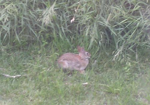 [A rabbit]
