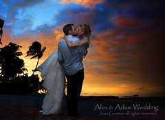 Alex & adam wedding.