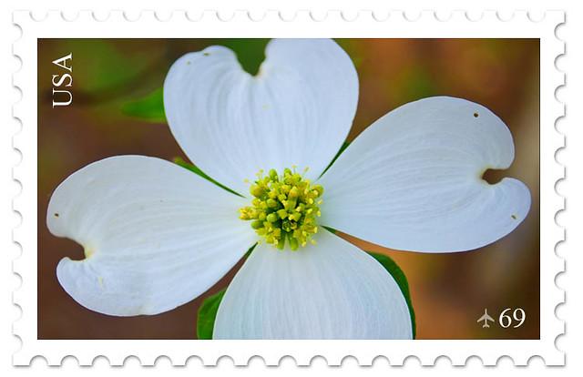 Dogwood Stamp