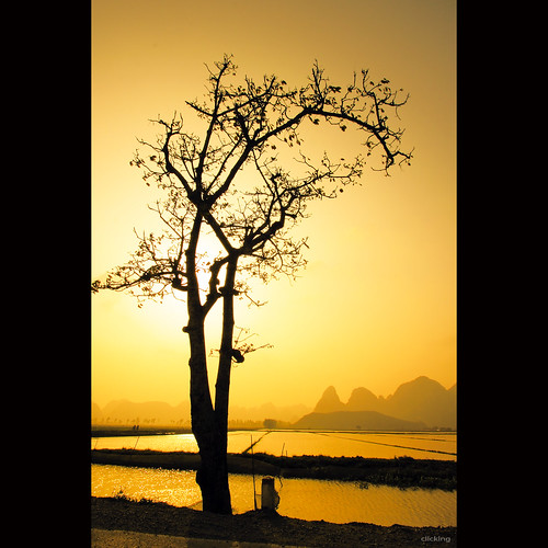trees sunset sun sunlight mountain sunshine silhouette yellow skyscape landscape one solitude alone branch atmosphere vietnam lonely ricefield goldensunset goldenhour hoànghôn vietnameselandscape