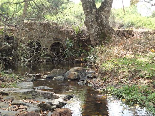 Rivulet found downstream of Gulliyada village