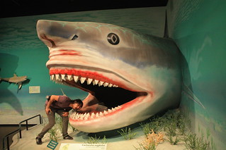 Megalodon at the Museum of Ancient Life