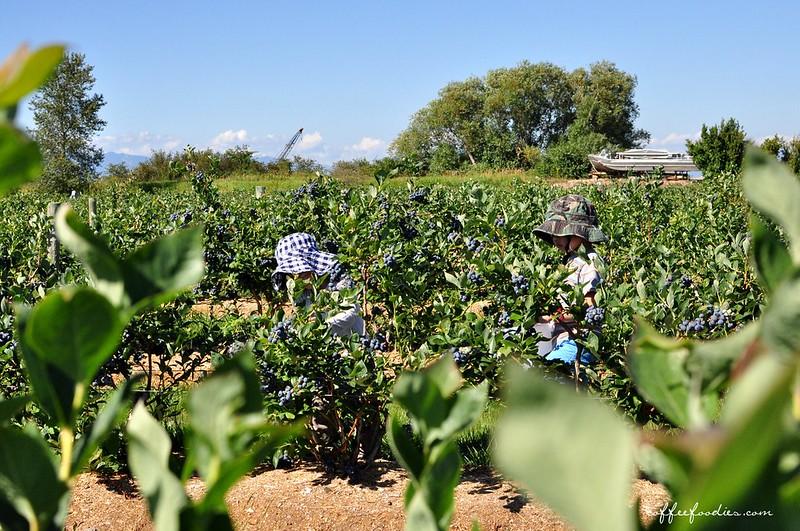 Emma Lea Farms Delta BC 00006