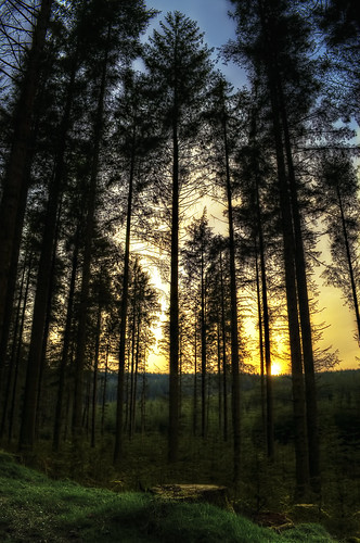 Fernworthy forest sunset