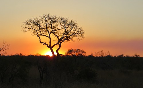 Kruger Park (and the cheetah center)