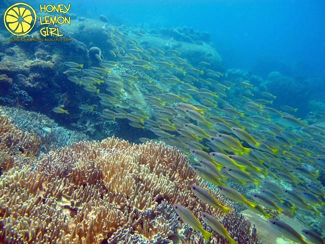 5D4N_Tioman Island_Diving-003