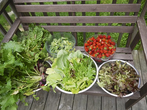 Early June Harvest
