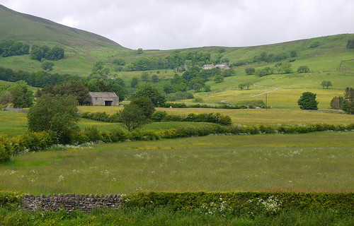 trees summer house june barn landscape countryside cows sheep farm meadows lancashire fells lane fields moors drystonewall hedgerow buttercups dunsopbridge whitewell ribblevalley forestofbowland whitemore duchyoflancastersestate