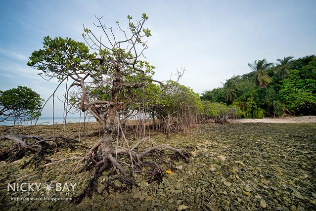 Mangrove Trees - DSC_6865