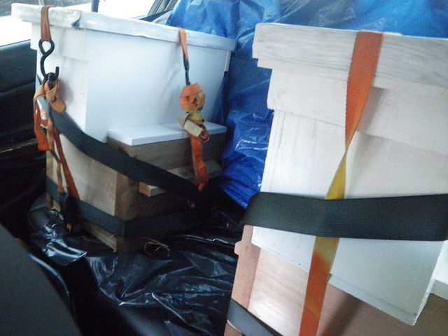Bee hives buckled into the back seat of my parents car