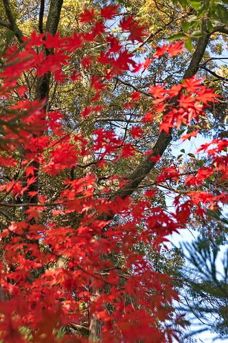 【写真】2012 紅葉 : 長岡天満宮/2020-10-09/IMGP6540