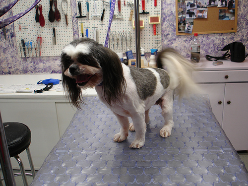 Dog Zoom Groom Review