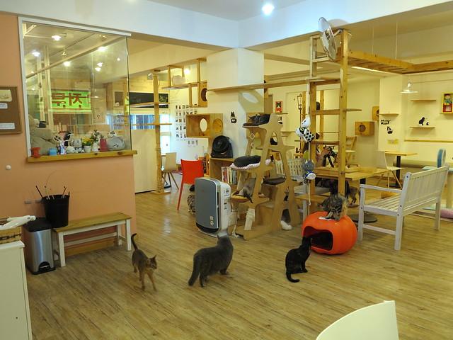 Tom's Cat Cafe