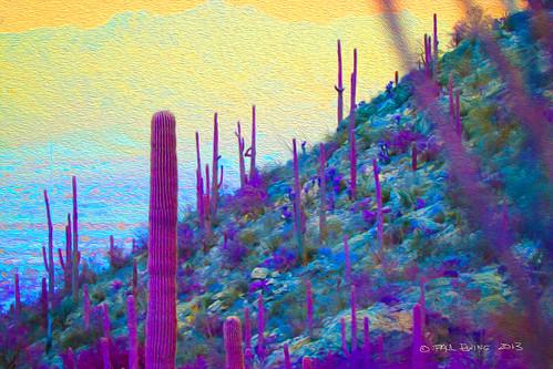 """Painted Desert, Purple and Yellow"""