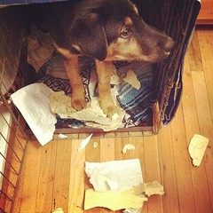 "My poor step son. Tomorrow he\'s going to have to give the excuse ""the dog ate my homework"". Because, THE DOG ACTUALLY ATE HIS HOMEWORK!"