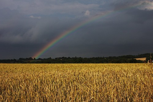 france field jaune canon landscape iso100 rainbow centre 1855 nuages paysage f11 orage champ arcenciel 1250 30mm nuageux loiret épis blés 550d chatillonsurloire eos550d