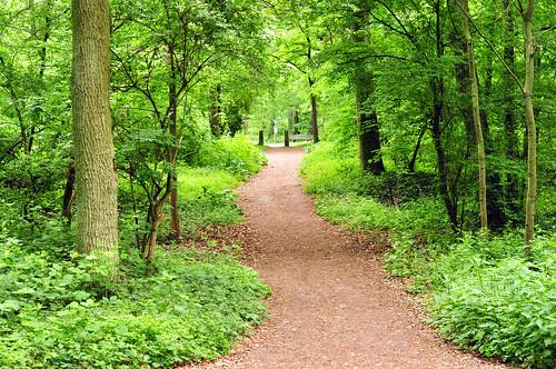 Waldspaziergang Unterer Dossenwald Mannheim Mai 2015