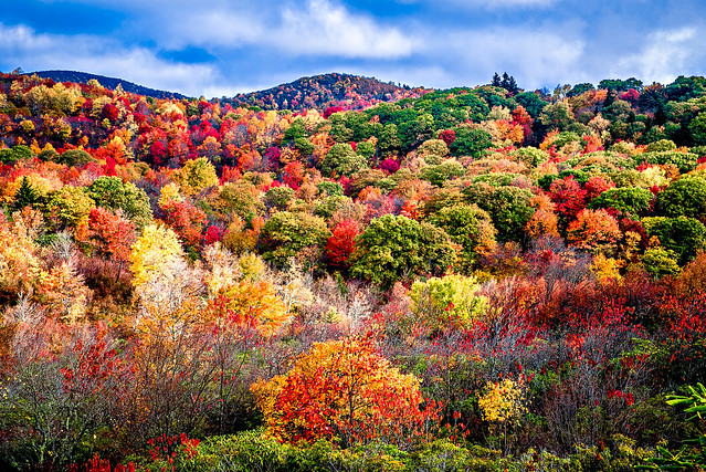 Graveyard Fields on the Blue Ridge Parkway in autumn