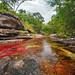 Caño Cristales, el río de colores, en La Macarena Meta by AventureColombia
