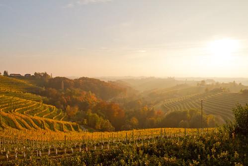 slovenia jeruzalem grapevines goldenlight winecountry landscape outdoor hills autumn fall