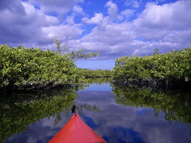 Mangrove Creek, Nikon COOLPIX L110