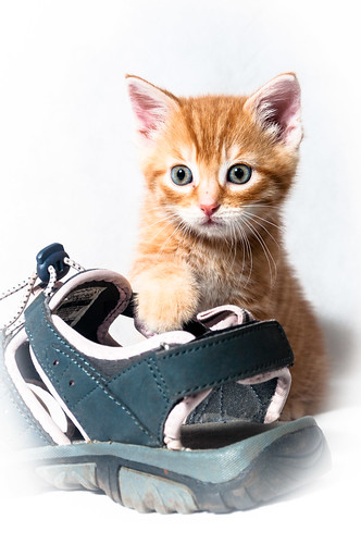 Geoffrey posing with a shoe
