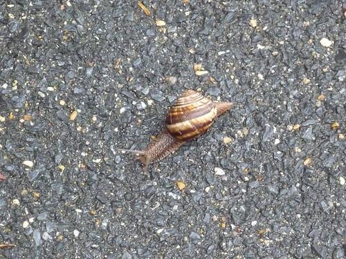 Escargot se promène width=