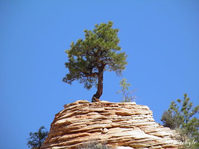 Trees & Rocks 16