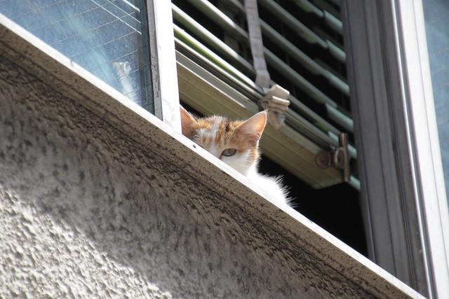 2階の窓から猫が見てた 1