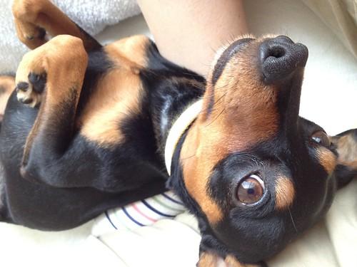珍しく甘えん坊な黒犬。