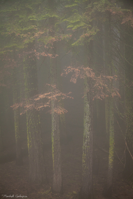 Foggy Grove