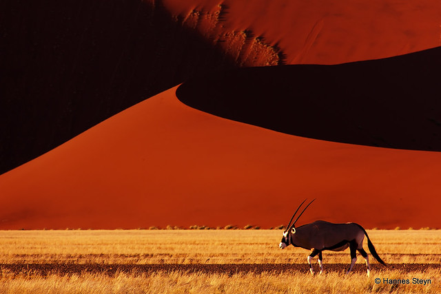 Oryx and the Sossusvlei Dunes - Refreshed