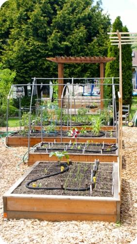 June 2013 Garden Update6
