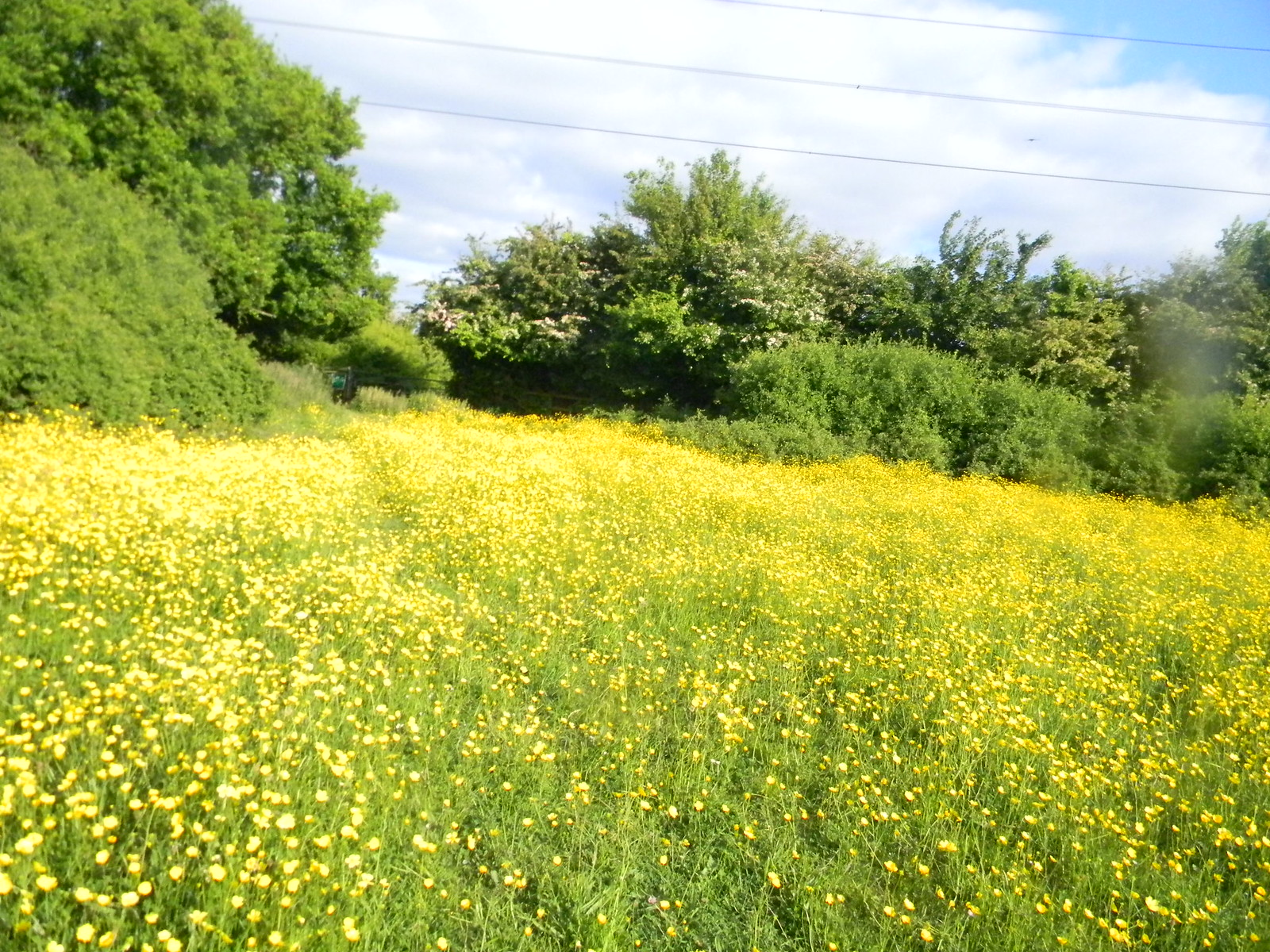 Buttercup meadow Wickford to Battlesbridge