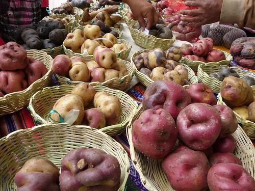 p1110129 copiarw129jpg 300513 lima perú papanativadelperú patata pérou kartoffel pommesdeterre potatoe