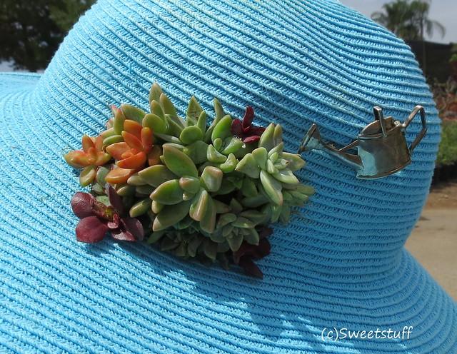 Succulent hat decoration