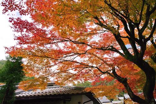 【写真】2012 紅葉 : 寂光院/2020-08-29/IMGP6291