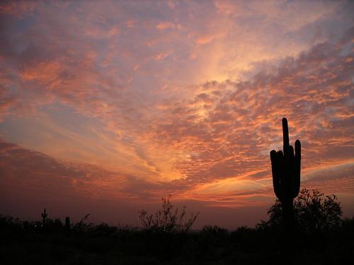 sunset arizona cactus southwest silhouette landscape colorphotography scottsdale saguaro sonorandesert mcdowellmountains keithmcgill