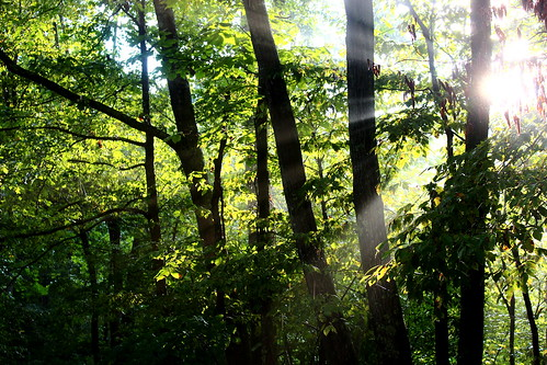 trees green nature forest virginia va 365 sunrays sunbeams 2013 bathcountyva 083113