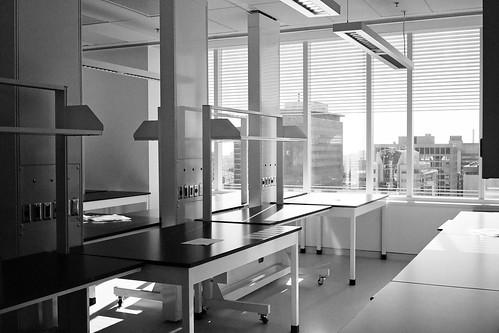 Lab, awaiting