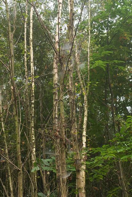 DSC_7225 spider webs
