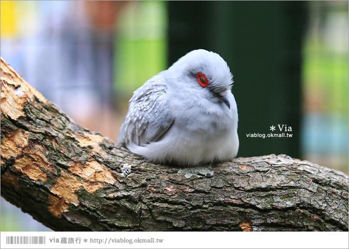 【新竹景點推薦】森林鳥花園~親子旅遊的好去處!在森林裡鳥兒與孩子們的樂園45