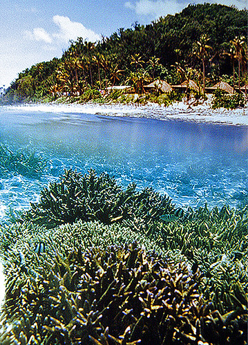 coral fiji island reef