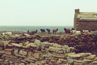 North Ronaldsay