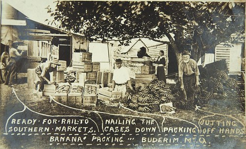 Packing bananas for market - Buderim Mountain 1920