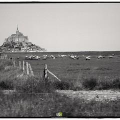 A L'OUEST|16/20| more : http://ow.ly/QWef304YPhV #bw #britain #landscape  #montsaintmichel #blackandwhite #noiretblanc #bretagne #paysage #nature #mareesalant #agneau #presale