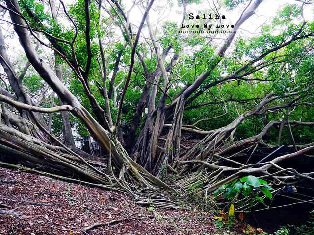 台南一日遊景點推薦安平樹屋安平老街 (30)