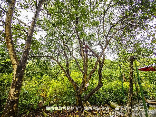 關西仙草博物館 新竹關西景點 美食 61