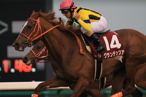 スプリングS勝ち馬 グランデッツァ(M.デムーロ)
