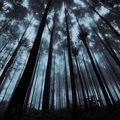 [フリー画像素材] 自然風景, 森林, 樹木 ID:201211041600